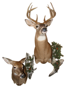 Buck & Doe Mount