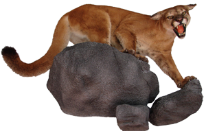 Mountain Lion Mount