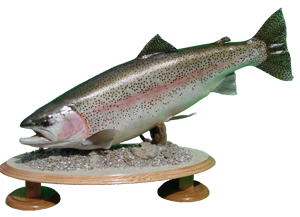 Rainbow Trout Mount
